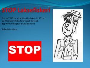 STOP Laksefiskeri over 75 cm