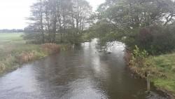 Motiv fra Flads å opstrøms Harreby bro