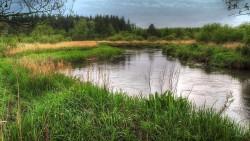 Motiv fra Gels Å - RSF skønne fiskevand
