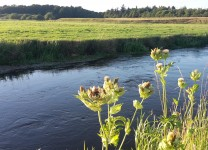 Motiv fra Gels Å nedstrøms Magne's bro sidst i juli måned