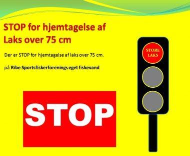STOP for hjemtagelse af laks over 75 cm