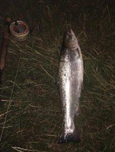 Stig Guldborg havørred 52 1.6 kg