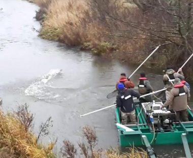 Søndagens el-fiskeri, forløb fint.