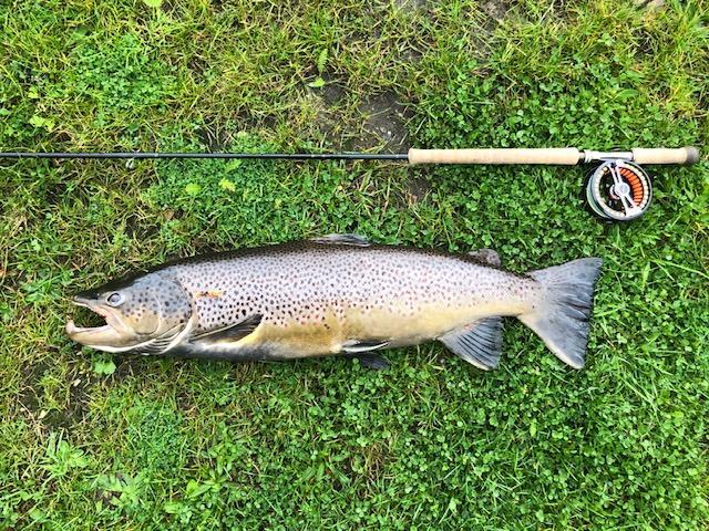 Werner Jens's havørred fanget i Gelså på sammenslutningens fiskevand 77 cm 5500 gram