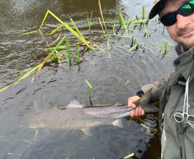 Brian Hass Mølleskov genudsatte en laks på ca. 90 cm