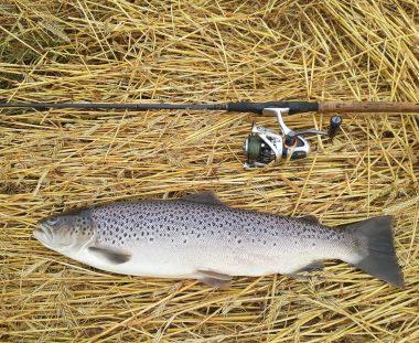 Martin Gude havørred fiskeri